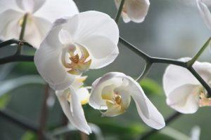 Orchideen, wie pflegt man sie?