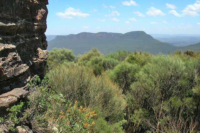 Der Cajeputöl wächst auch in Australien