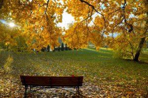Der Garten im Herbst