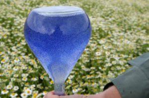 Das blaue Azulen. Es entsteht erst bei der Destillation.