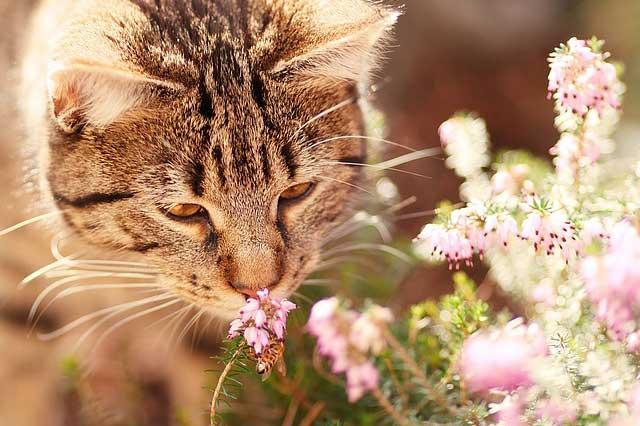 Katze, Riechen und Düfte