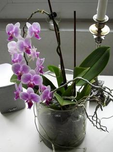 orchideen pflege der sch nen aus dem regenald. Black Bedroom Furniture Sets. Home Design Ideas