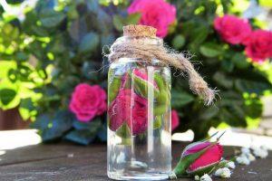 Rosenblüten zur Parfüm Herstellung