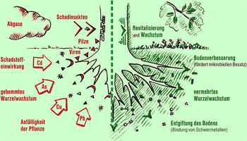 Skizze vom Wirksystem bei geschädigten Pflanzen