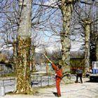 Die Bäume vor der Behandlung mit WALDLEBEN