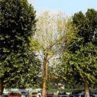nur die äußeren Bäume wurden mit WALDLEBEN behandelt