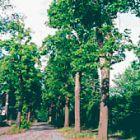 Im Juni 1988 sind alle Bäume wieder gesund.