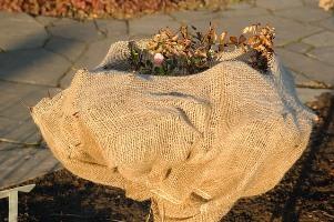 Pflanzenschutz Im Winter Wie Uberstehen Pflanzen Sicher Den Winter