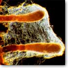 Mykorrhiza