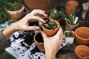 Pflanzenzucht, natürliche Gartenpflege
