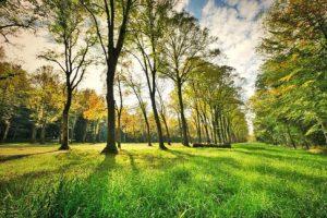 Bäume im Wald, natürliche Gartenpflege