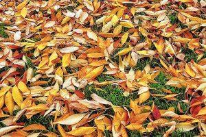 Rasen, Blätter, Herbst, Raenpflege
