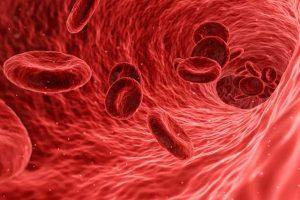 Blut Zellen