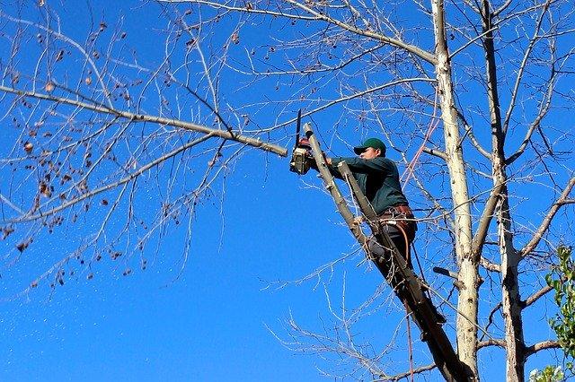 Baum beschneiden im Februar