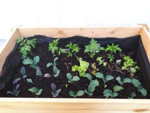 24.März die erste Bepflanzung