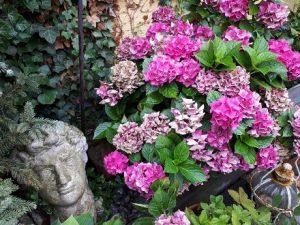 Hortensien, Das Gartenjahr im Februar