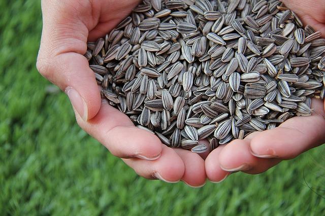 Sonnenblumenkern Mehl, proteinreich
