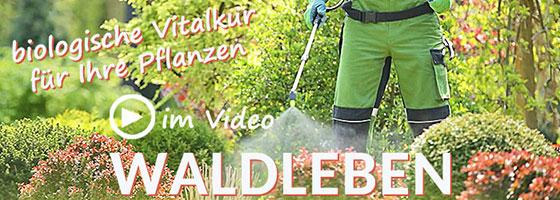 Video zu WALDLEBEN