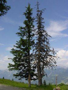 geschädigte Bäume